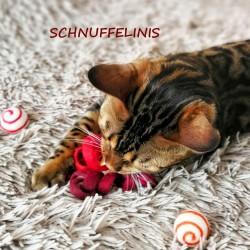 Katzenspielzeug Filzspirale